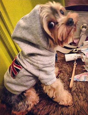 เสื้อฮู้ดสุนัข
