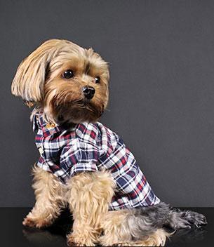 Richmond Dog Shirt Navy Red