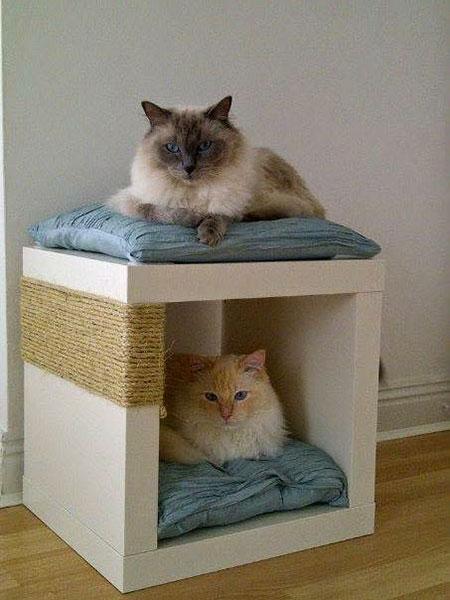 ที่ฝนเล็บแมว เตียงนอนแมว