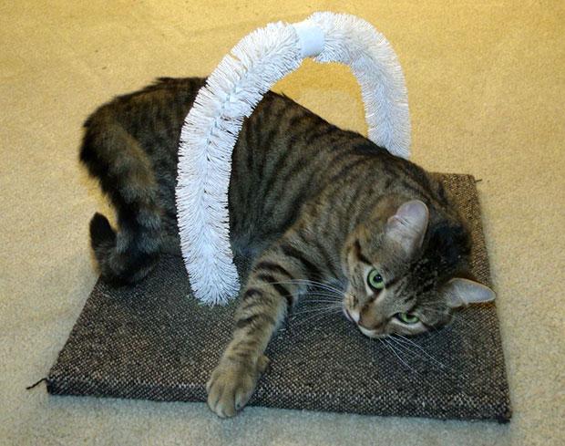 ที่เกาหลังแมว DIY