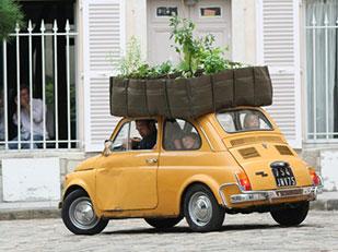 ปลูกต้นไม้ ในถุง