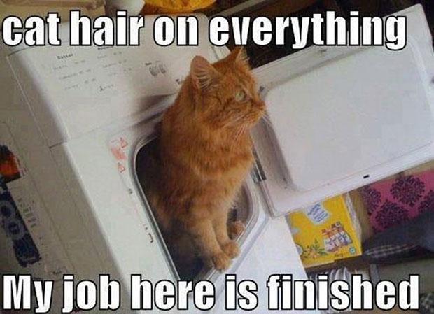 เครื่องอบผ้าแห้ง กำจัดขนแมว