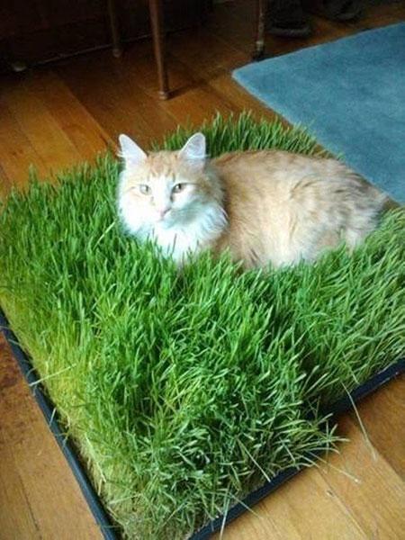 เอาใจแมว เตียงนอนแมว หญ้า
