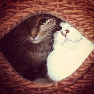 เตียงนอนแมว DIY