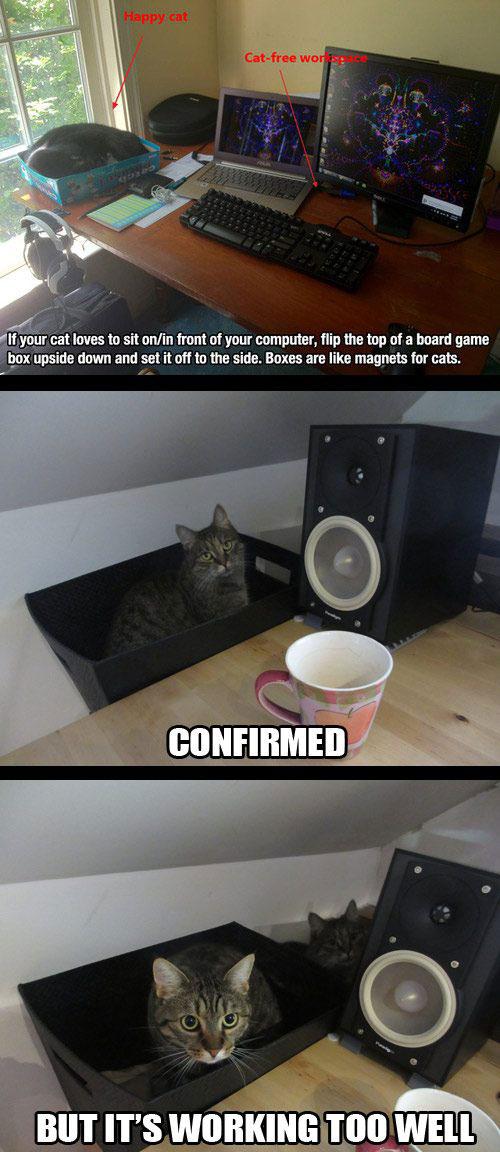 แมวในฝากล่อง