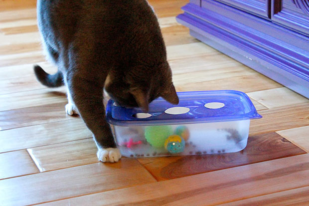DIY ของเล่นแมว ทัปเปอร์แวร์