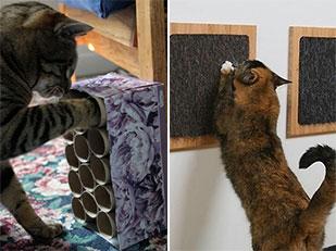DIY ของเล่นแมว