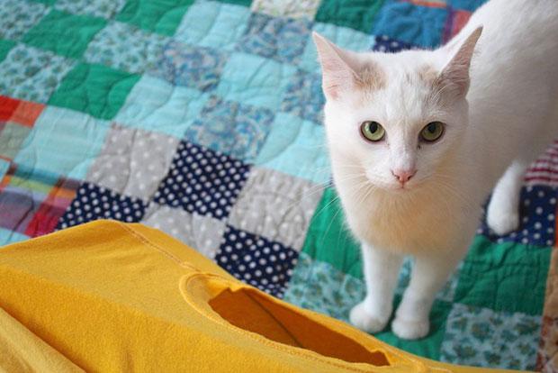 DIY เต็นท์ แมว