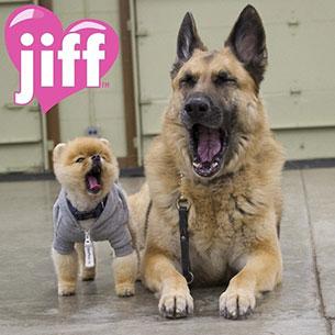 Jiff - น้องหมา
