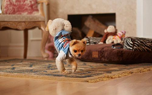 Jiff - สุนัขเดินสองขาเร็วที่สุด