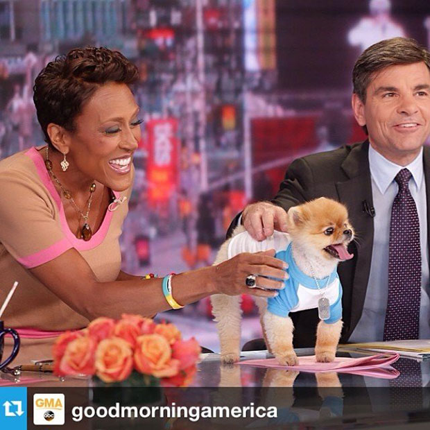 Jiff - ABC's Good Morning America