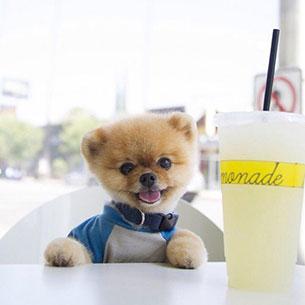 Jiff - Lemonade