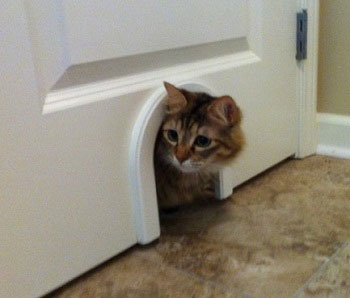ช่องประตูแมว