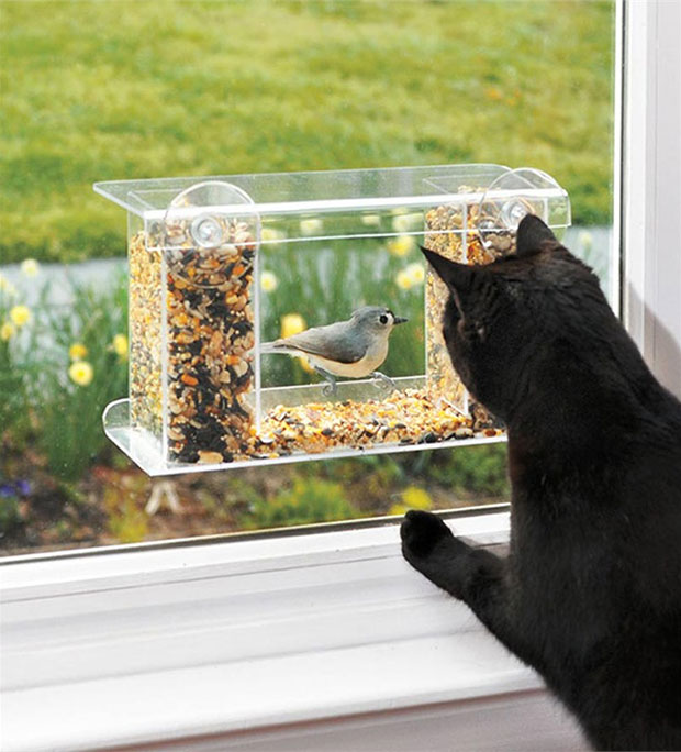 ที่ให้อาหารนกสำหรับแมว