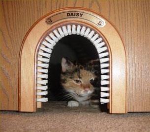 ประตูแมว