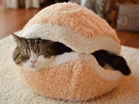 โพรงเตียงนอนแมวนุ่ม