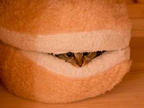 โพรงเตียงนอนแมวแบบนุ่ม