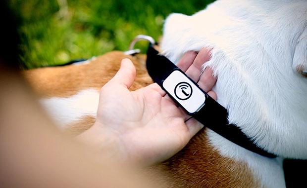 GPS ติดตามตัว ปลอกคอสุนัข