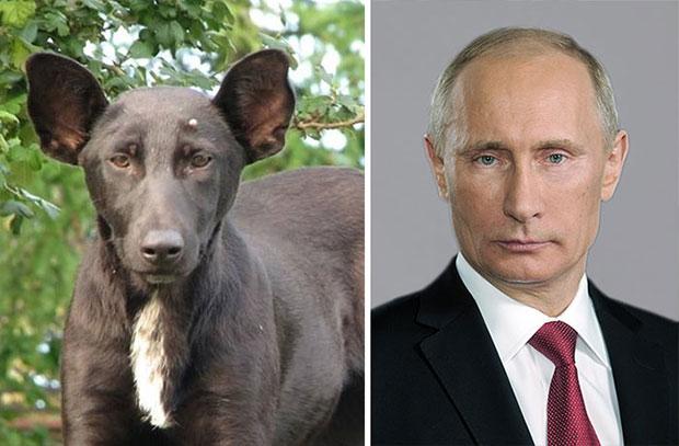 ภาพเหมือน ประธานาธิบดีรัสเซีย Vladimir Putin