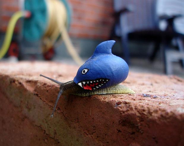 ระบายสีหอยทาก ฉลาม