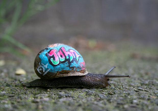 ระบายสีหอยทาก Graffiti