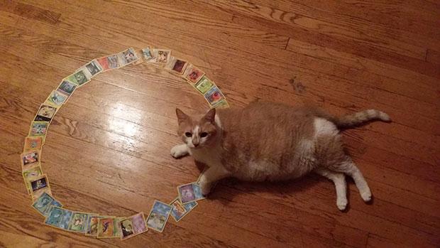วงกลมจับแมว Cat Circle