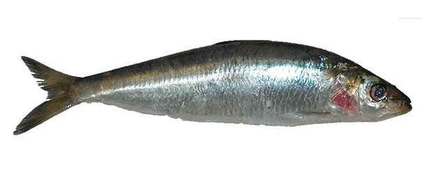 อาหารไบโอตินสูง ปลาซาร์ดีน
