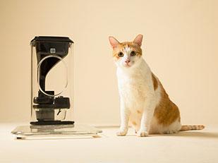 Bistro Cat Feeder เครื่องให้อาหารแมวอัตโนมัติ ตรวจสุขภาพแมว