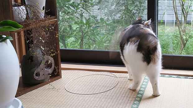 กับดักล้อมแมว ล่อแมวมา