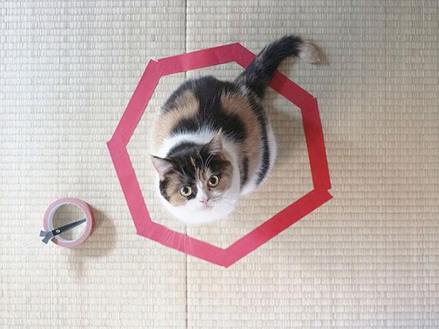 กับดักแมว ติดกับ