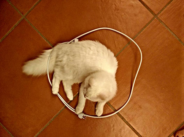 Cat Circle วงกลมจับแมว