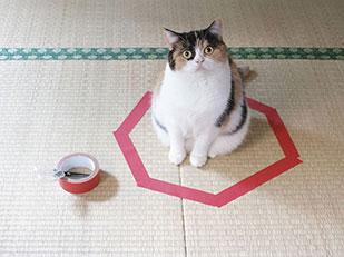 Cat Circle วงกลมดักจับแมว