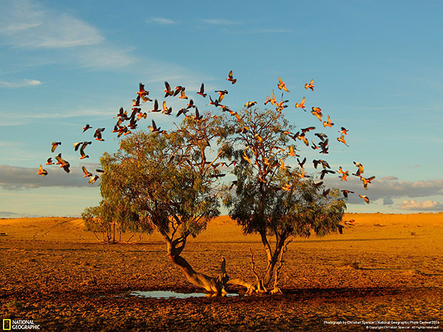 National Geographic Photo Contest 2014 A tree dreaming