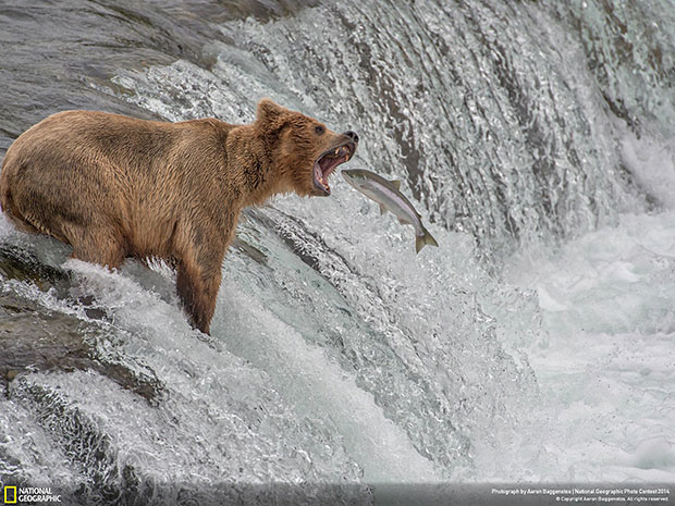 National Geographic Photo Contest 2014 Catch of the Decade