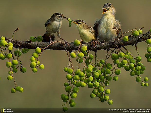 National Geographic Photo Contest 2014 Mom's Love
