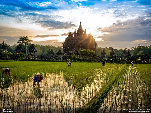 National Geographic Photo Contest 2014 Sunrise Plaosan Temple