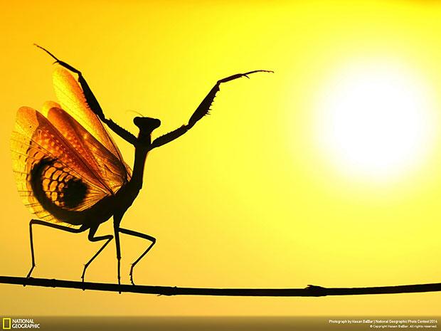National Geographic Photo Contest 2014 Sunward