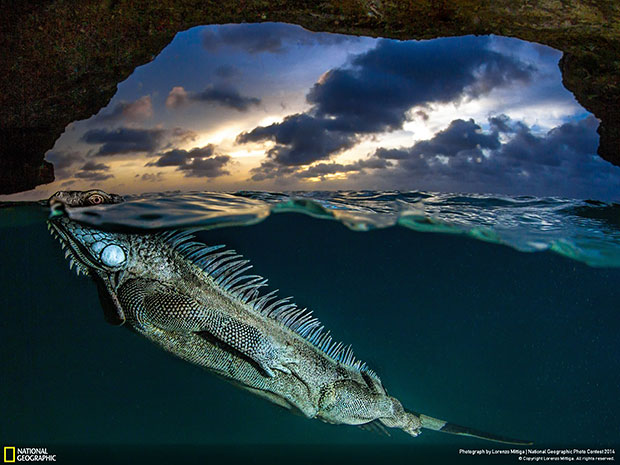 National Geographic Photo Contest 2014 The Iguana's cave