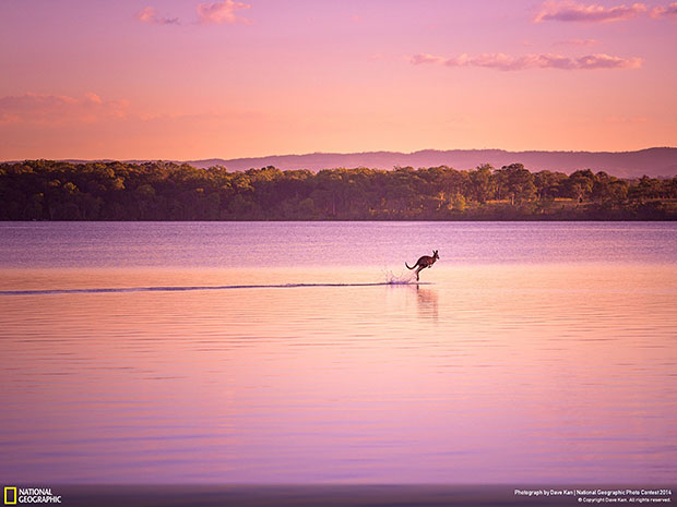 National Geographic Photo Contest 2014 Walking on Water