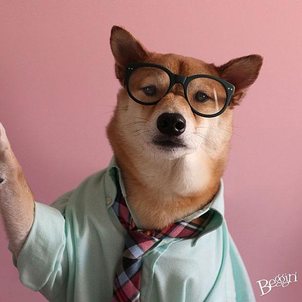 หมา Bodhi เสื้อเชิ้ตฟ้าเขียว ใส่แว่น ผูกเนคไท