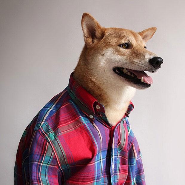 หมา Bodhi เสื้อเชิ้ตลายสก็อต