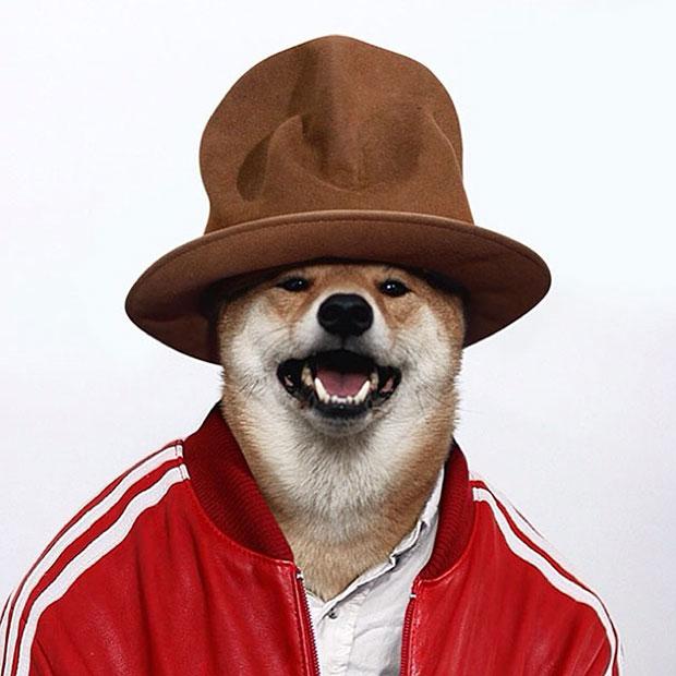 หมา เสื้อวอร์มแดง