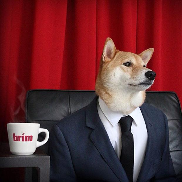 หมา เสื้อสูทน้ำเงิน ผูกไท