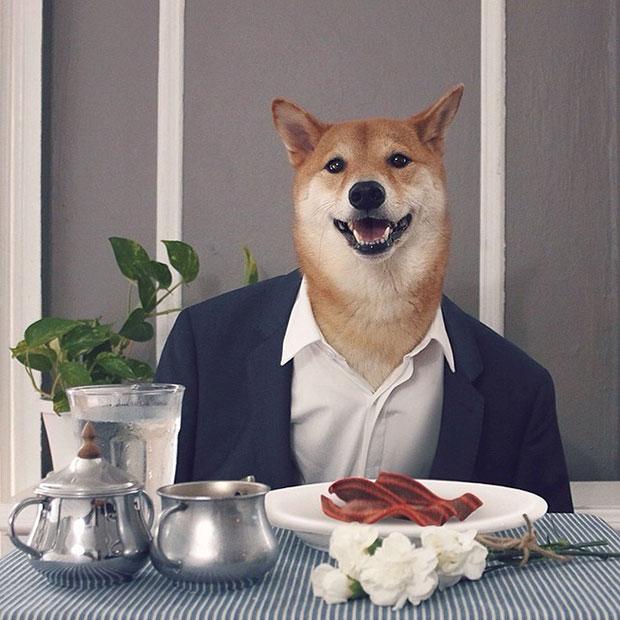 หมา เสื้อสูทน้ำเงิน