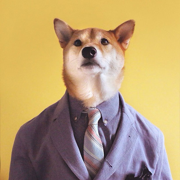 หมา เสื้อสูทม่วง