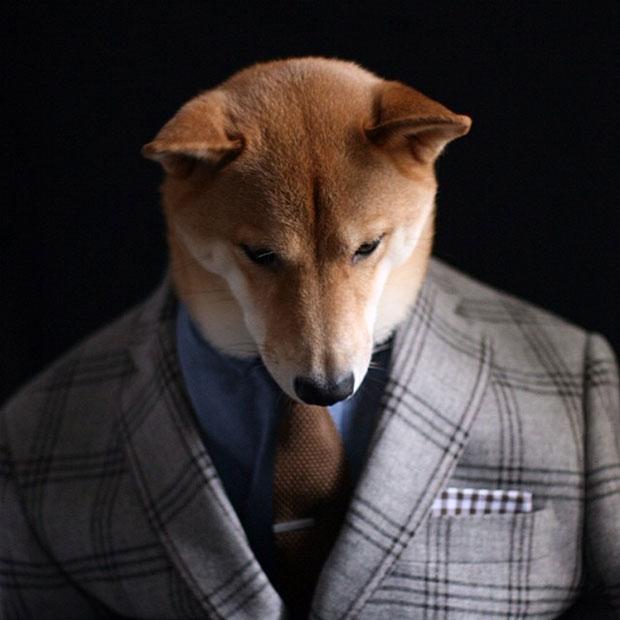 หมา เสื้อสูทลาย