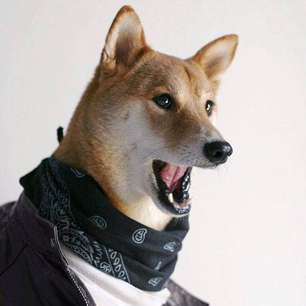หมา Menswear Dog ใส่ผ้าพันคอ