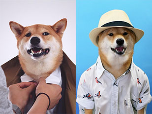 หมา Menswear Dog