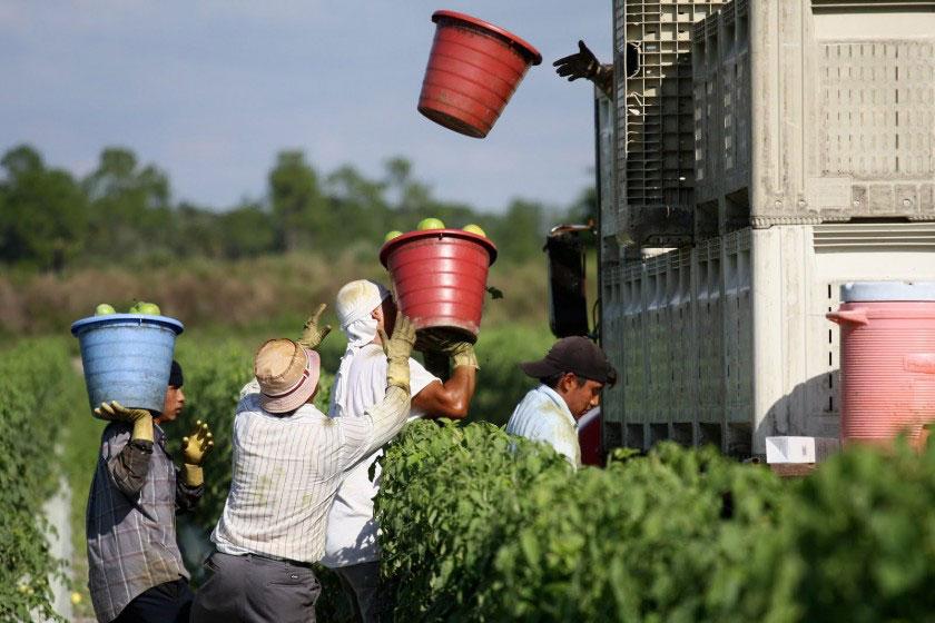 องค์กรบริจาคอาหารเพื่อการกุศล Coalition of Immokalee Workers
