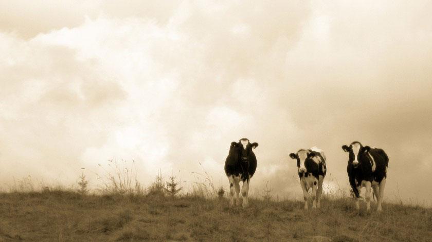 องค์กรบริจาคอาหารเพื่อการกุศล Heifer International